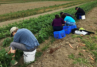 farm gleaning and volunteering with JFS